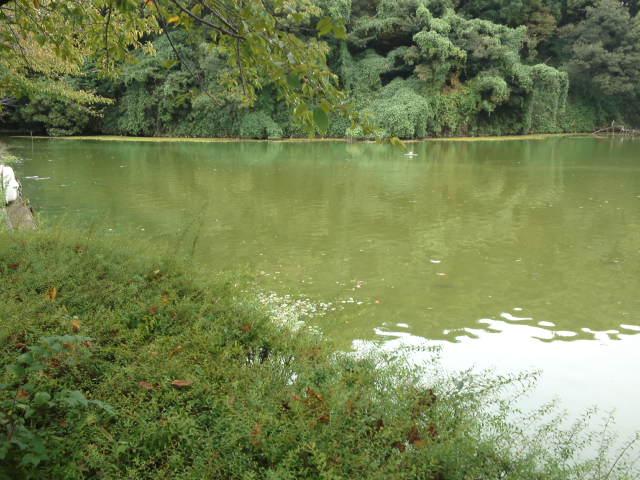 茶臼山の河底池