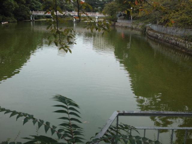 茶臼山の池。子供の頃が懐かしいです。