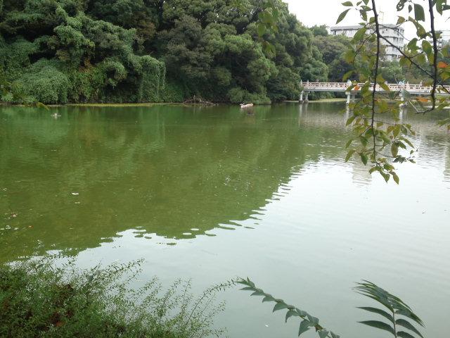 茶臼山の池