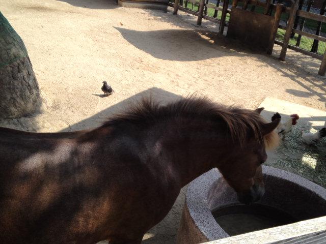 王子動物園のふれあいコーナーではこんなにも間近でお馬さんが見れます♪