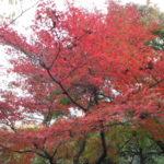 京都観光のお得な1日フリー乗車券「京都・嵐山1dayパス」で紅葉&竹林を満喫