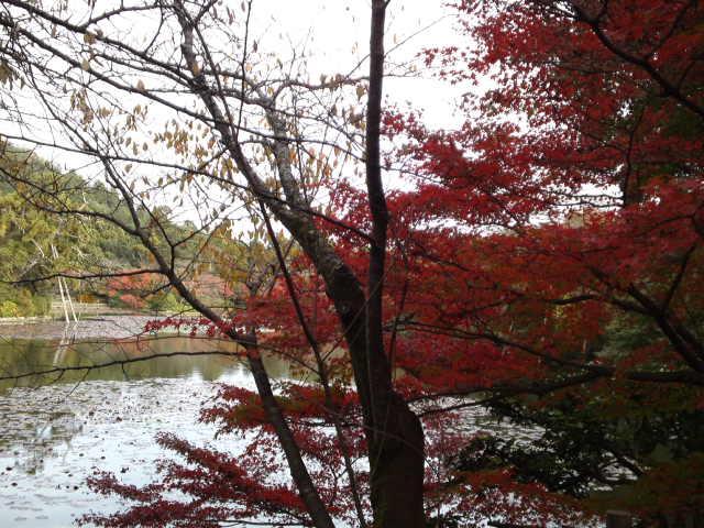 素晴らしい紅葉です。
