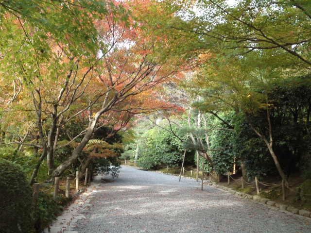 青紅葉と紅葉が入り交じる素晴らしい景色。