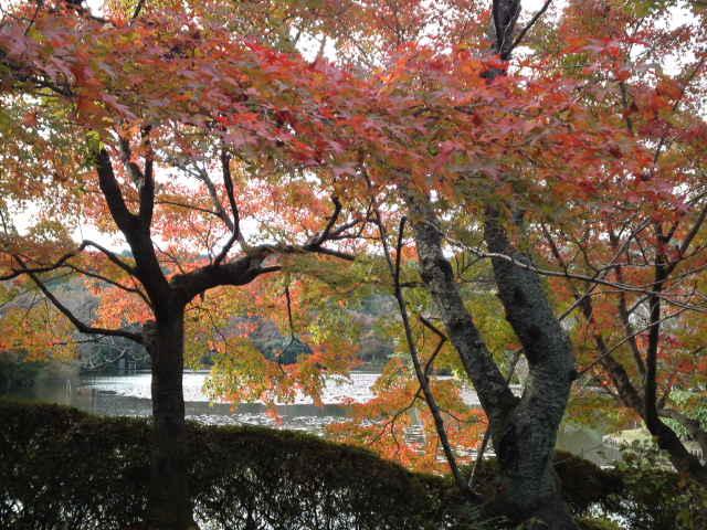 紅葉が色づき始めていました。