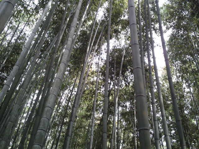 「竹林の散策路」と名付けられた遊歩道