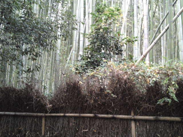 林の道(竹林の小径)