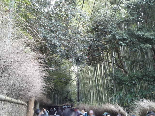 嵐山の北東に広がる嵯峨野の竹林の道