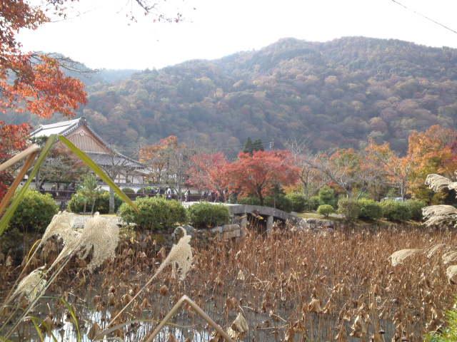 そろそろ紅葉で色づき始めています。