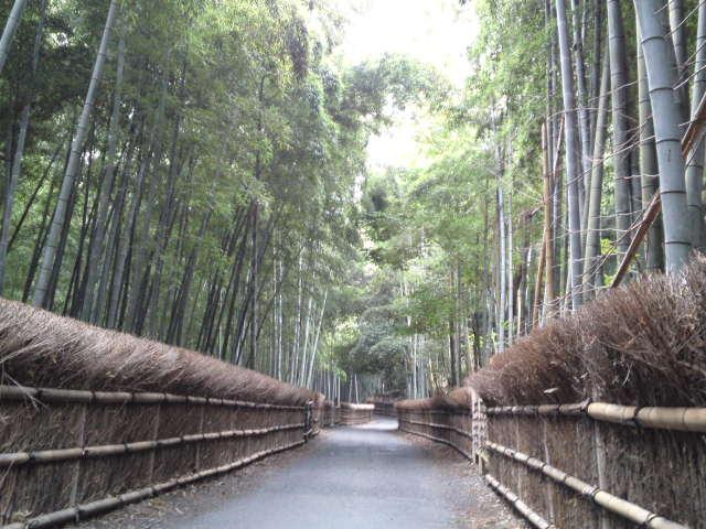 洛西竹林公園での竹の経・竹の道の竹林観光