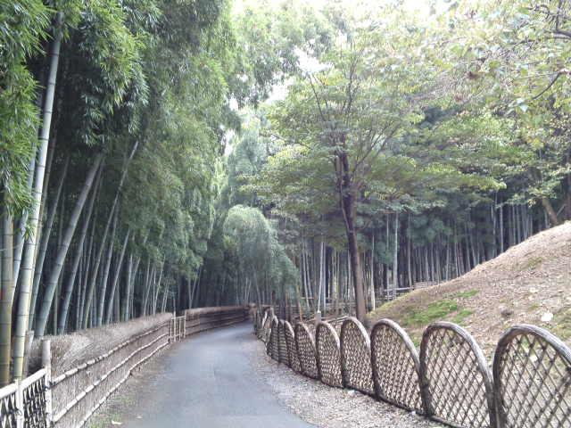 じっくりと竹林を見れます
