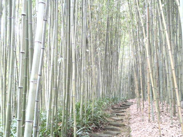 竹の香りがどこか懐かしく、そして癒やされます。