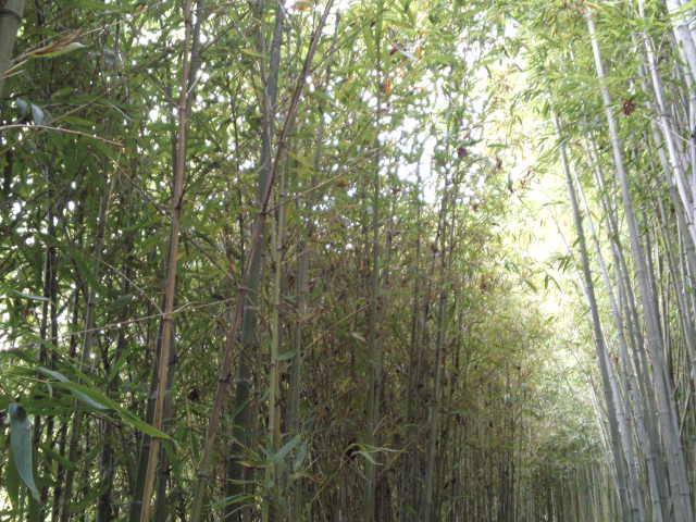 竹類が約110種類