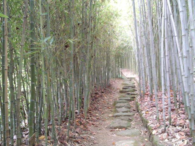 色々な竹の特徴が見て楽しめます。