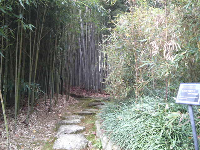 竹林浴を存分に楽しめます。