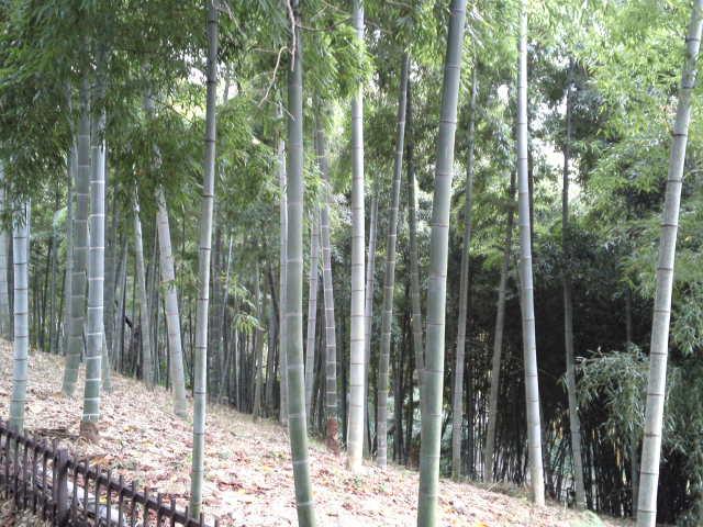 竹林と新緑が良い雰囲気を持っています。