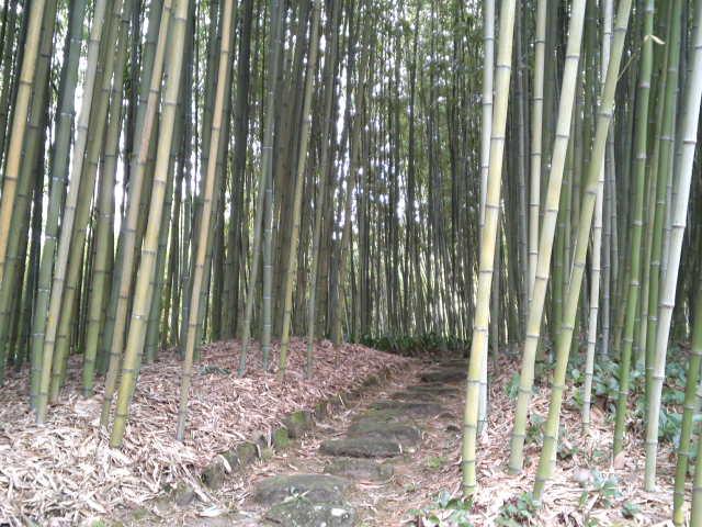 竹の香りを楽しみつつ散策。