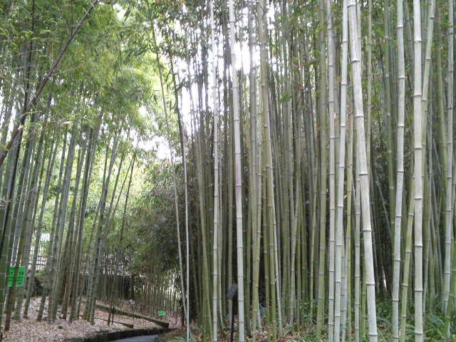 竹の良い匂いがします。