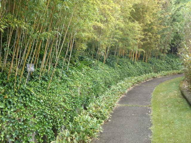 自然あふれる小道を散策。