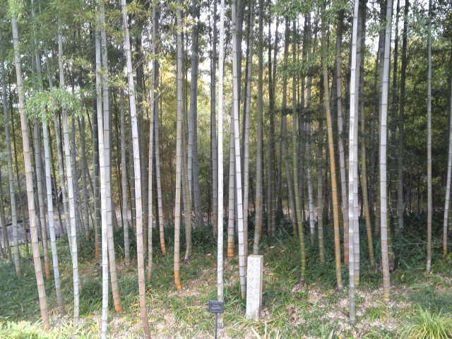 また違った竹林です。