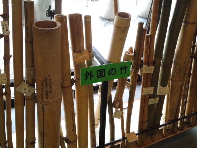外国の竹!