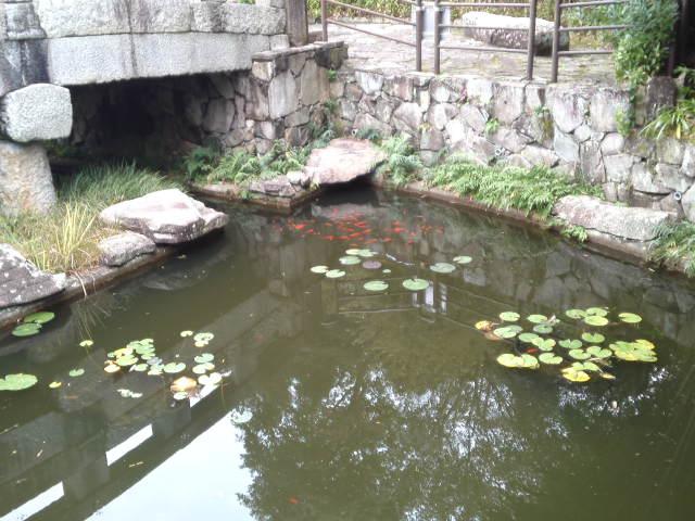 池には金魚が泳いでいて風情があります。