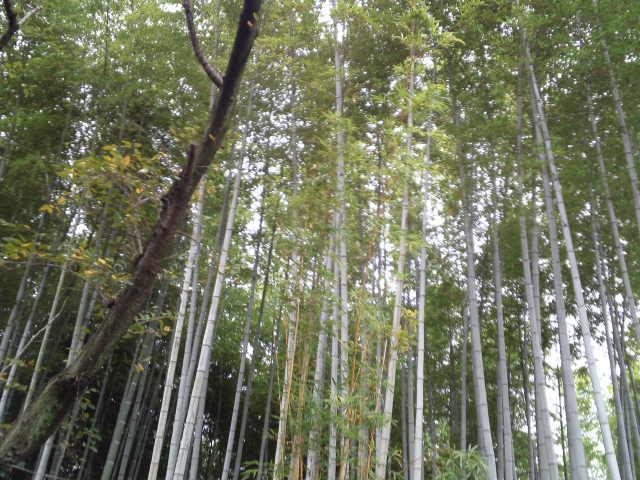 色鮮やかな竹林