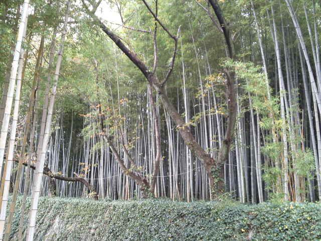 違った雰囲気の竹林