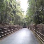 京都市洛西竹林公園へ日帰り観光!向日市 竹の経・竹の道の竹林観光も