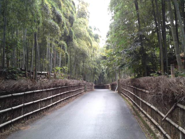 竹林を日帰りで見たくて京都市洛西竹林公園へ。