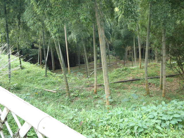 緑の散策路と呼ばれる場所