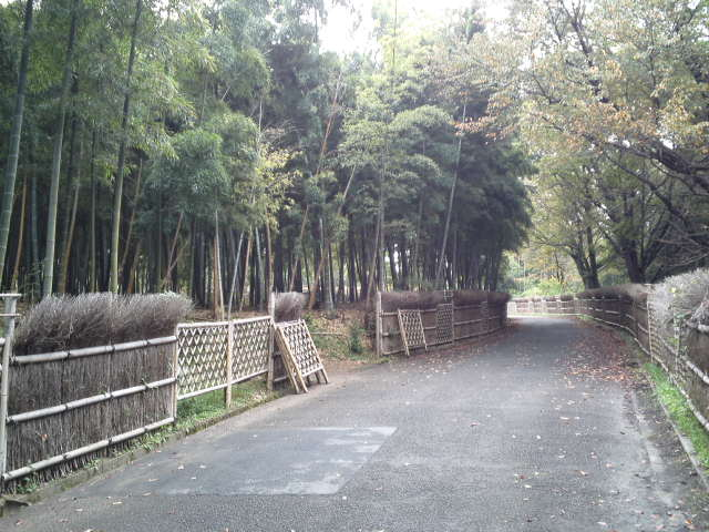 竹林の小径です。