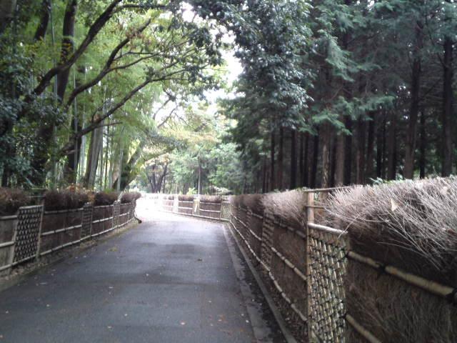 竹林道・竹の径です。