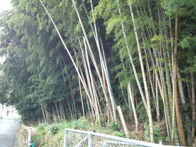 竹林からは竹独特の香りが。