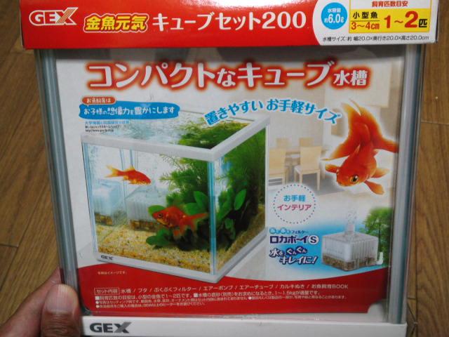 金魚元気・コンパクトキューブ水槽