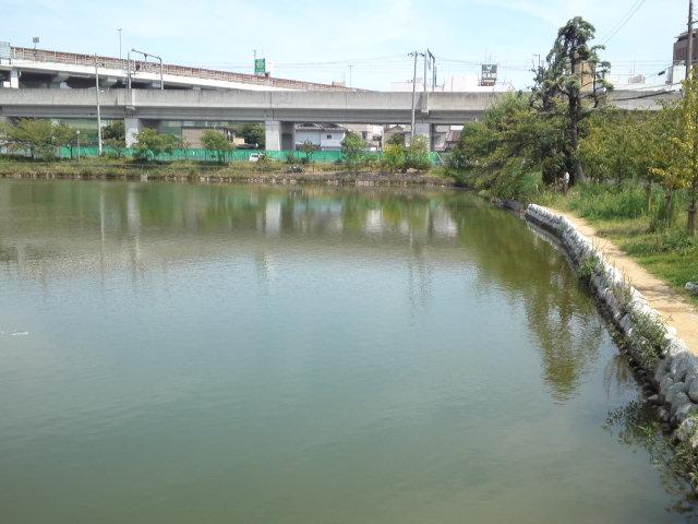写真は桃ヶ池公園の東側。網で魚とりをしている親子さんがいました。