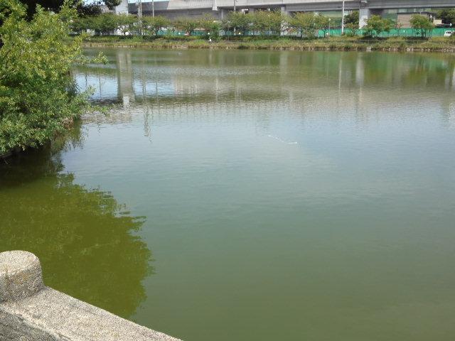 桃ヶ池公園の池。小学校時代の懐かしい思い出が蘇ります。