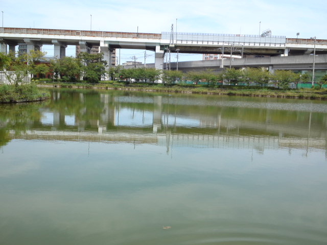 ザリガニや小魚を採って遊んだ桃ヶ池公園