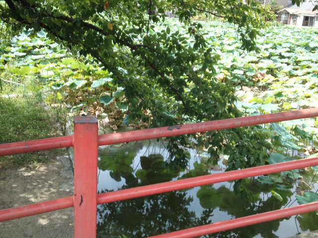 写真は桃ヶ池公園の池の水際を散歩