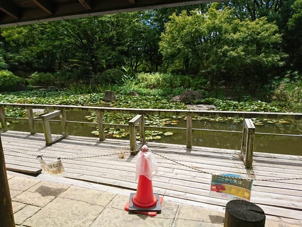 写真は元浜緑地の西側にある池のあたりです。