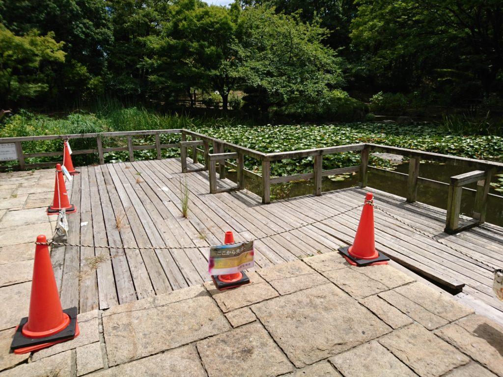 元浜緑地の池
