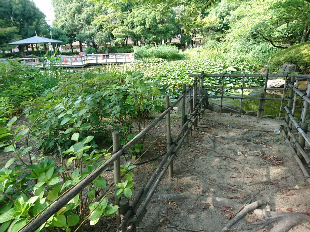 元浜緑地にはザリガニがいる?